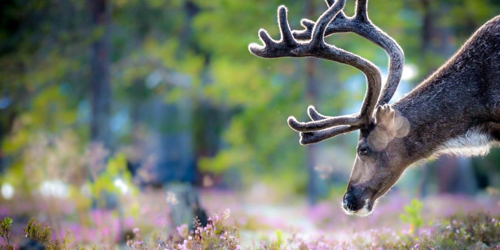 Voorbeeldfoto fotografiecursuseindhoven.nl